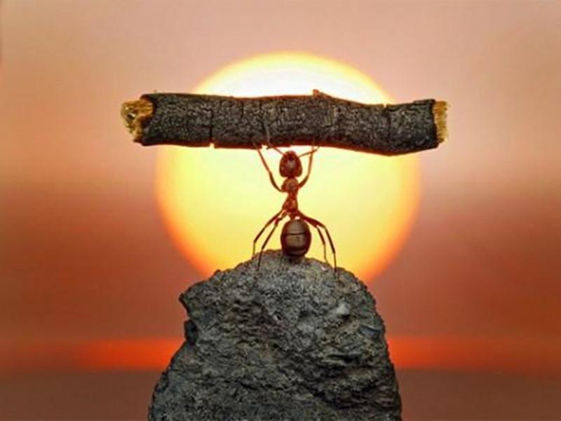 蚂蚁金服出海记:两条业务线区别进行,最终将汇合
