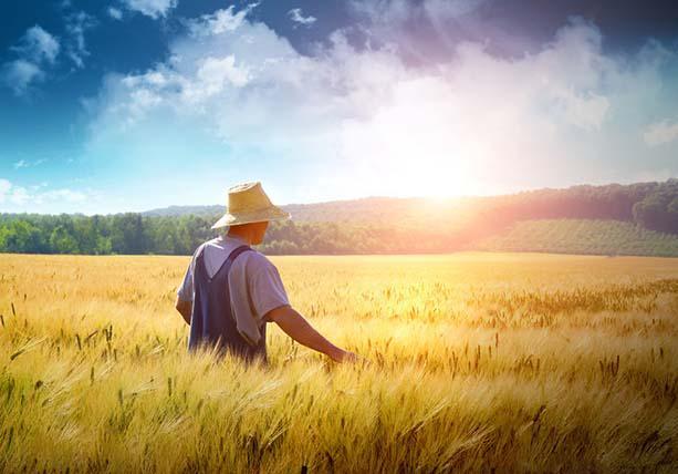 财政部:对金融机构农户小额贷款利息收入免征增值税