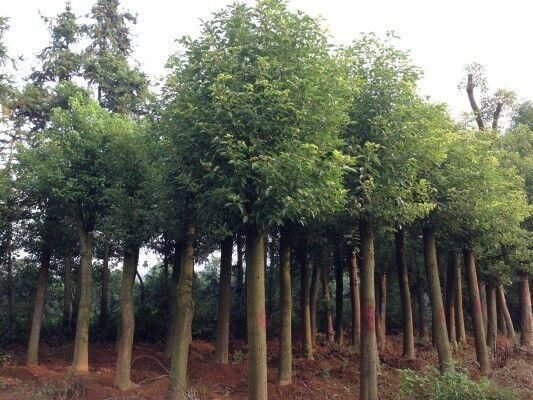 远东宏信与蓝天园林开展1亿苗木租赁