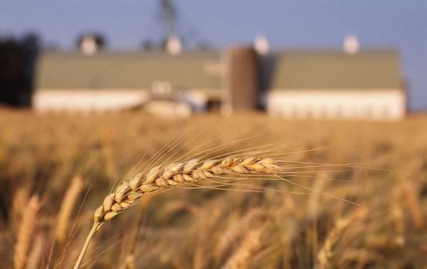屹农金服深耕农业产业链金融,未来两年计划撮合超30亿规模贷款